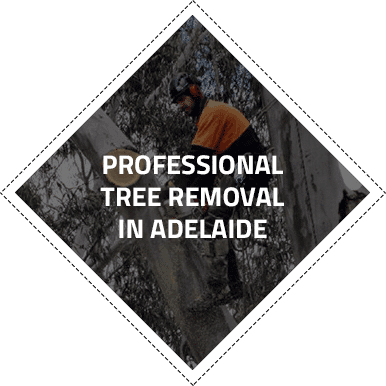 About Northern Tree Service