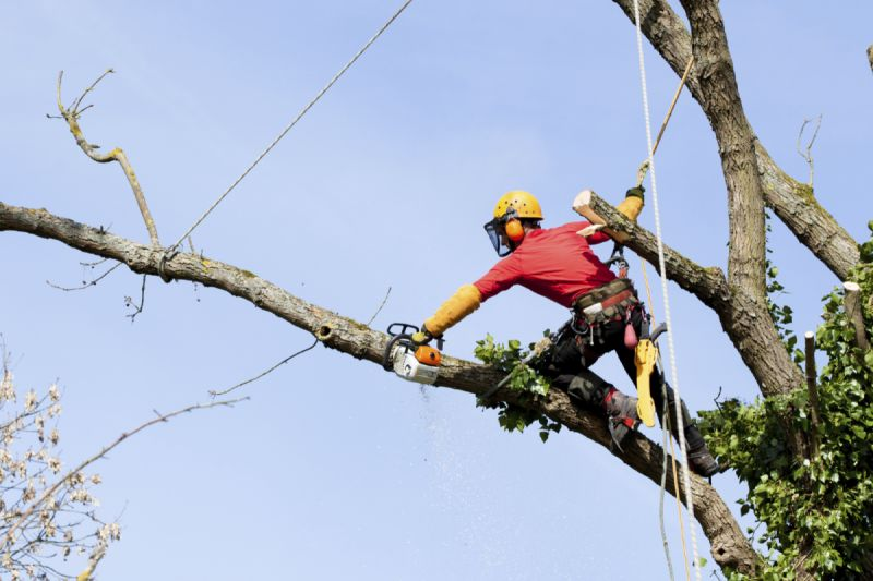 image of hire professional tree removal service