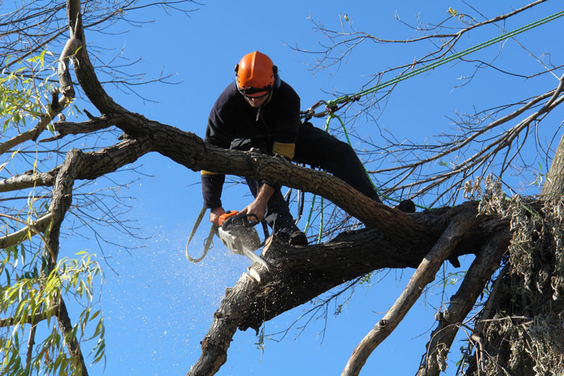 Tree Removal Cost Adelaide